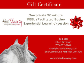 Give the gift of horse time