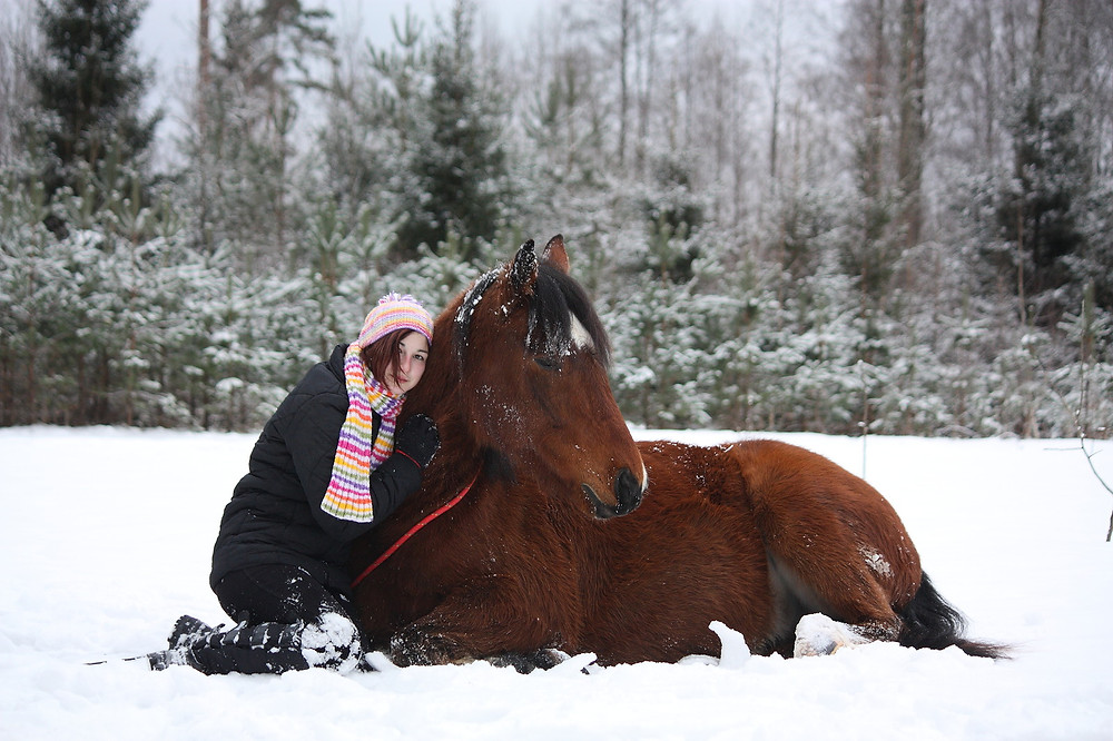 horse sit in snow.jpg