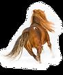 gracefulhorses.com