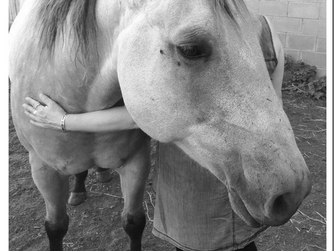 Bonnie's horse time