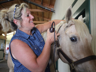 University of Kentucky study suggests horses can help humans learn