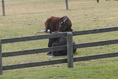 horses teach leadership skills