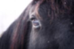 Horses Teach Mindfulness