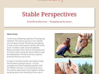 Stable Perspectives - Newsletter