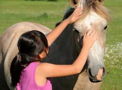 Horses Love Reiki