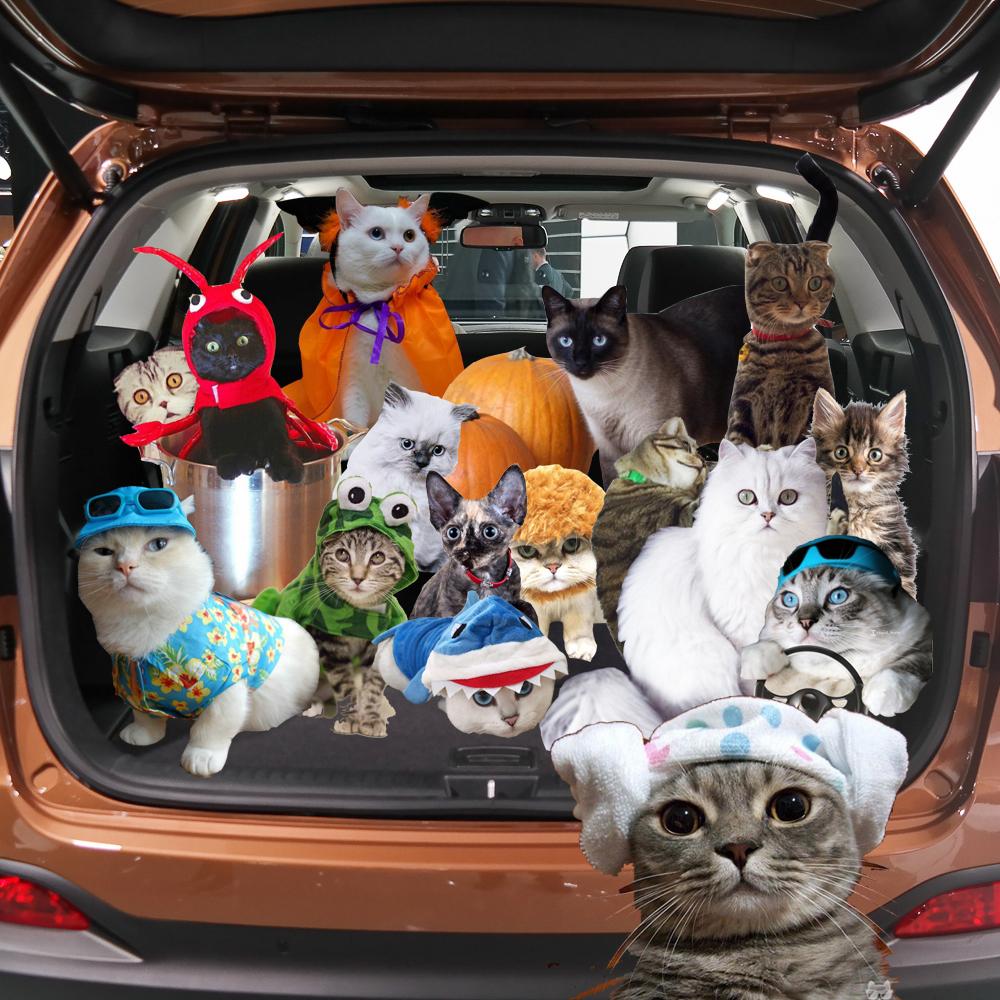 1000x1000-instagram-template-cats-in-trunk