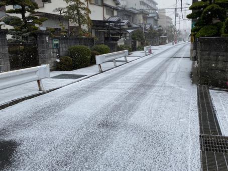 岸和田市荒木町にてポスティング(1月前半チラシ⑨)