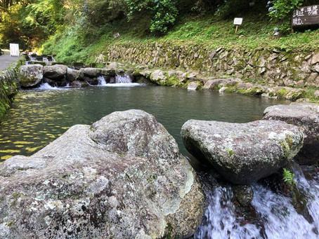 綺麗な川とニジマス☆in千早赤阪村☆