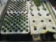 gardentour2.jpg