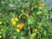 gardentour3.jpg