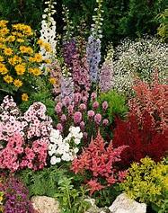 Dividing Perennials- When... How... Why...