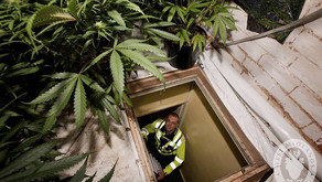 Locked in, locked up, deported: UK cannabis farms