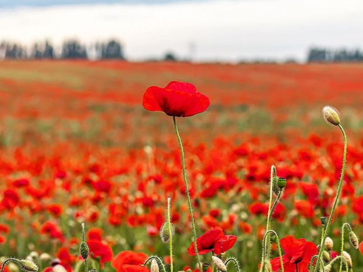 Tracking down the poppy-chasers