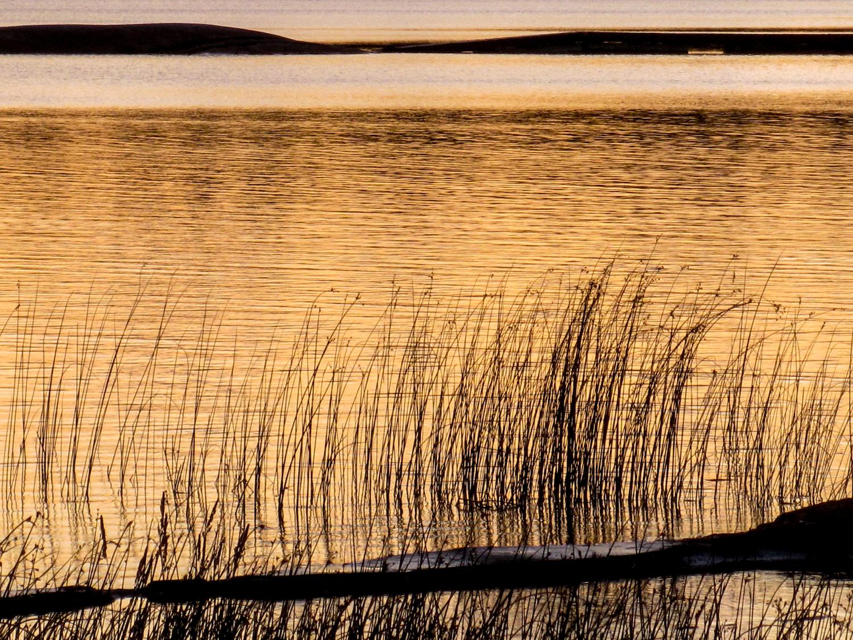 Golden Reflection IMG_0082 5x3.5 300dpi