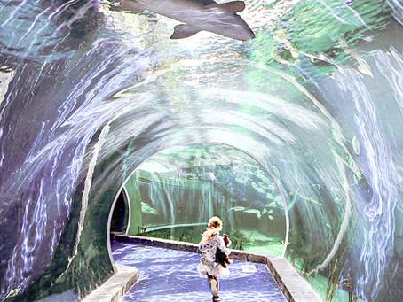 Oceanarium - aquarium
