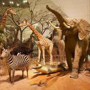 Darwin museum - animal evolution