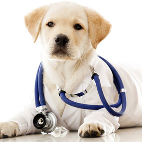 Animal care - dog vets&hotels