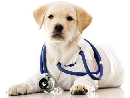 Animal care - dog vets&hotels