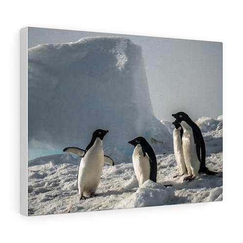 Adelie Penguins on Iceberg at Cape Bird, Ross Sea, Antarctica