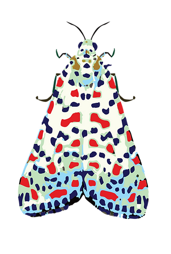 bug-02-02.png
