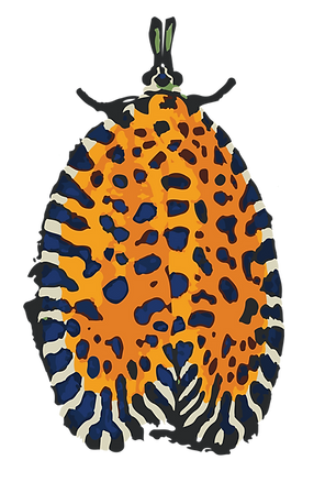 bug1-02.png