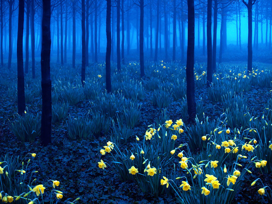 beautiful-mysterious-forests-3__880.jpg