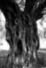 olive titel.jpg