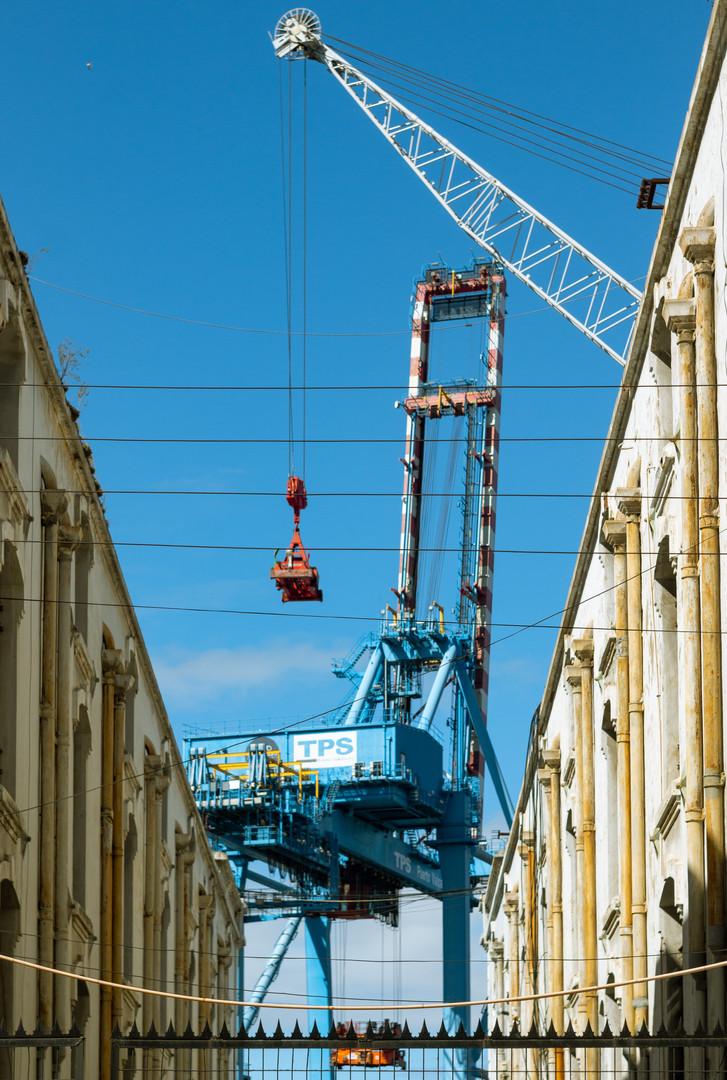 Cranes in the Sky_.jpg
