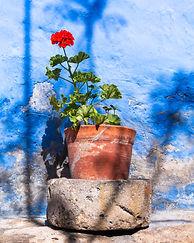What a rose.jpg