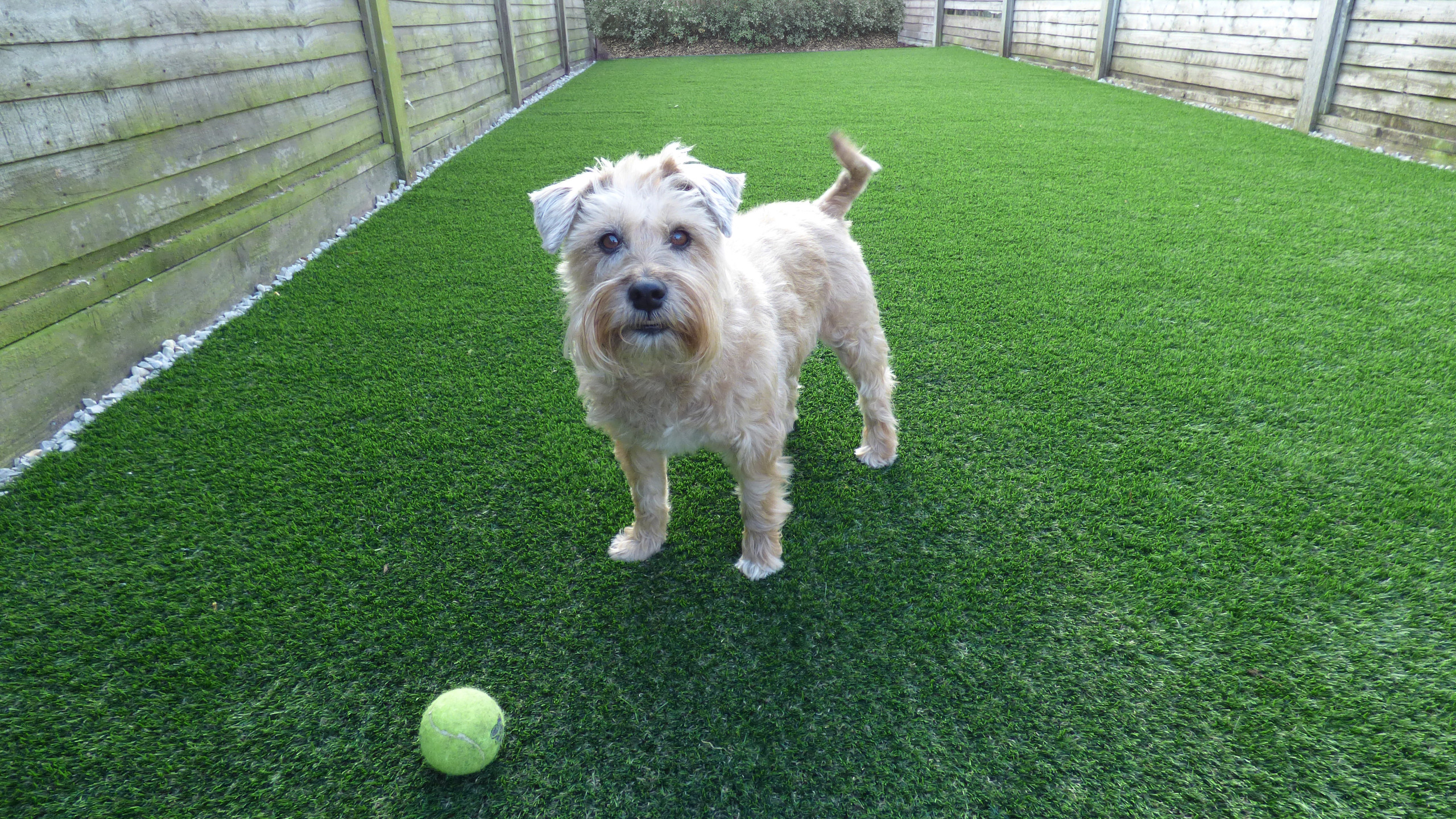 Luxury Artificial Lawn recently completed to create a pet friendly gorgeous lawn installation
