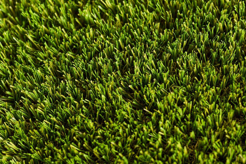 Optimum grass close up