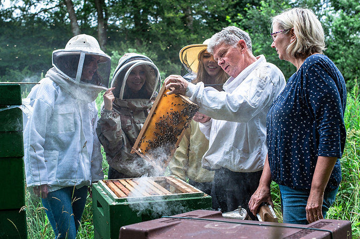 Meet-our-bees.jpf