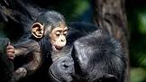 rockhampton zoo.png