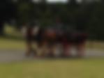 bunya horse.png