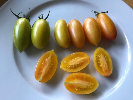 "Tomato Spotlight ""Blush"""