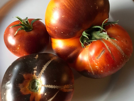 Tomato Spotlight-'Lucid Gem'