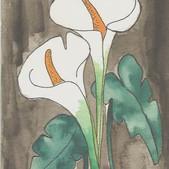 lilys.jpg