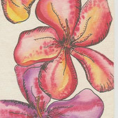 hawaiin-flowers.jpg