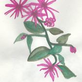 02 Deep Pink Floral.jpeg