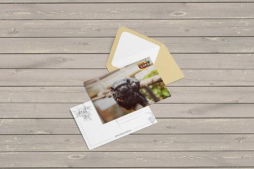 Set de Postales (Digital para Imprimir)