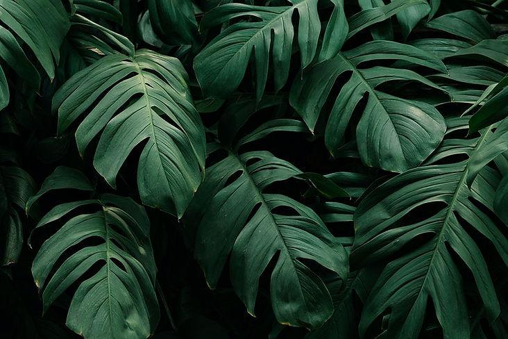 rm21-plant-jira-8770_1.jpg
