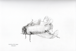 McDONNELL XF-85 GOBLIN  (BUMBLEBEE)