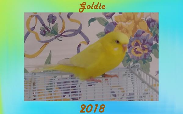 Goldie Memorial.png