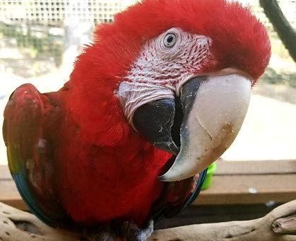 Sancho macaw.jpg