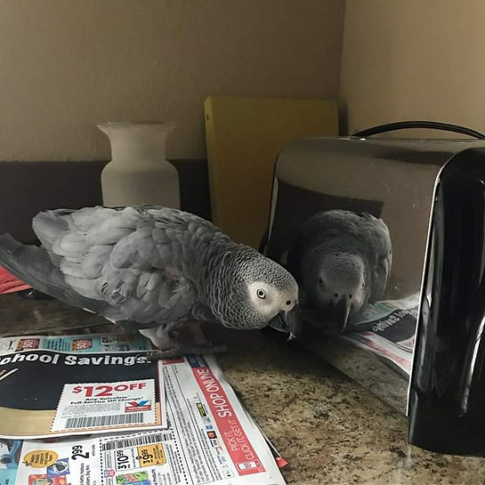 Maggie toaster.jpg