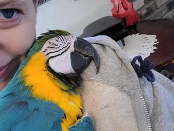 An EBR testimonial: Kiri the dream bird