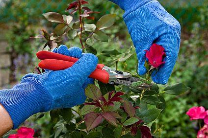 Power of Pruning