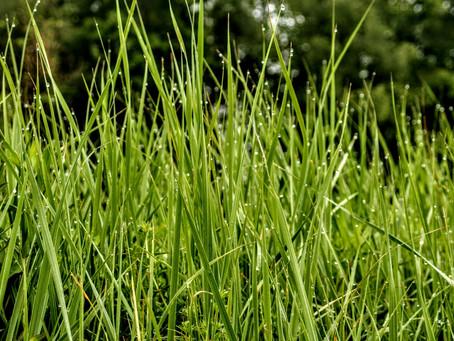 co w trawie piszczy czyli spacer z przeszkodami