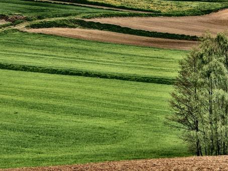 chwalcie łąki umajone