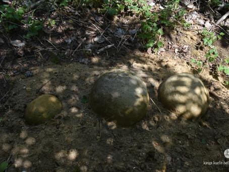 wielkie jaja dinozaurów i inne cuda